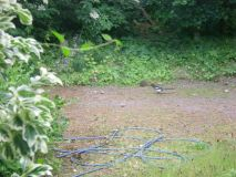 Magpies and Hedgehog (Pic1)