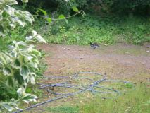 Magpies and Hedgehog (Pic3)